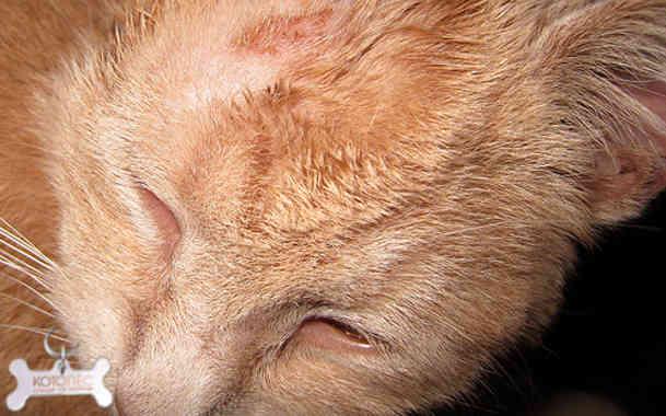 Как лечить лишай у человека от животного по